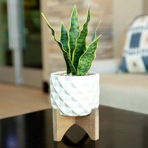 New Artificial Snake Plant Dimple Ceramic Pot